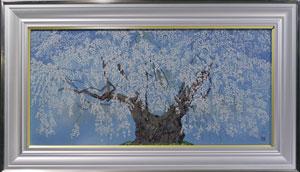 坪井の枝垂桜(2)