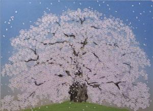 醍醐桜(5)
